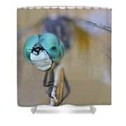 Blue Dasher Dragonfly #1 Shower Curtain
