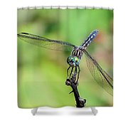 Blue Dasher Dragonfly On A Branch Shower Curtain