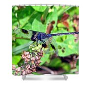 Blue Dasher Shower Curtain