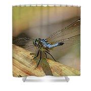 Blue Dasher On Old Leaf Shower Curtain