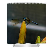 Blue Dhasher Dragonfly Shower Curtain