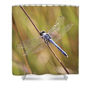 Blue Dragonfly Against Green Grass Shower Curtain