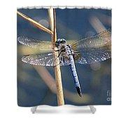 Blue Dragonfly Shower Curtain by Carol Groenen