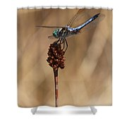 Blue Dragonfly On Brown Reed Shower Curtain