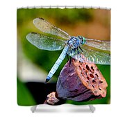 Blue Dragonfly On Lotus Seed Pod Back View Shower Curtain