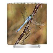 Blue Dragonfly Portrait Shower Curtain by Carol Groenen