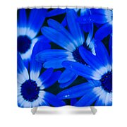 Blue Daisies, Medford Oregon Shower Curtain