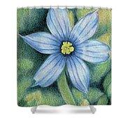 Blue Eyed Grass - 1 Shower Curtain
