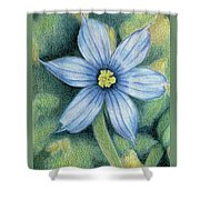 Blue Eyed Grass - 1 Shower Curtain