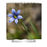 Blue-eyed Grass II Shower Curtain