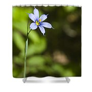 Blue-eyed Grass IIi Shower Curtain