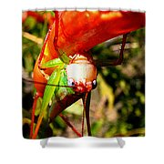 Blue Eyed Grasshopper 2 Shower Curtain