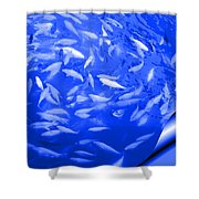 Blue Fish Abstract Shower Curtain