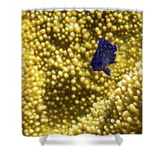 Blue Fish In Coral Shower Curtain