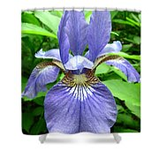 Blue Flag Iris Shower Curtain