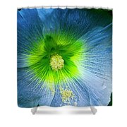 Blue Flower In Morning Sun Shower Curtain