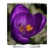 Blue Flower Opening Shower Curtain