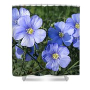 Blue Flowers In The Sun Shower Curtain