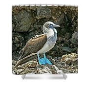 Blue Footed Boobie Shower Curtain