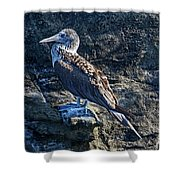 Blue-footed Booby Prize Shower Curtain