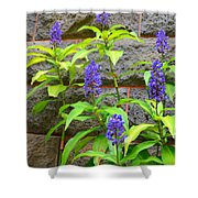 Blue Ginger At The Wall Shower Curtain
