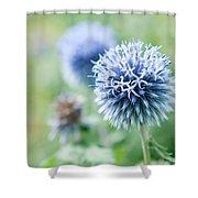 Blue Globe Thistle Flower Shower Curtain