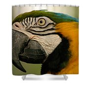 Blue Gold Macaw South America Shower Curtain