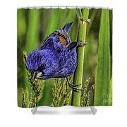 Blue Grosbeak On A Reed Shower Curtain