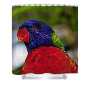 Blue Head Bird Shower Curtain