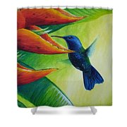 Blue-headed Hummingbird Shower Curtain