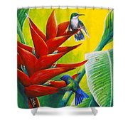 Blue-headed Hummingbirds And Heliconia Shower Curtain