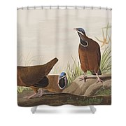 Blue Headed Pigeon Shower Curtain