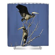 Blue Heron 21 Shower Curtain