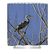 Blue Heron 22 Shower Curtain by Roger Snyder