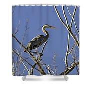 Blue Heron 22 Shower Curtain