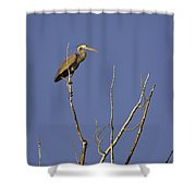 Blue Heron 28 Shower Curtain