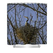 Blue Heron 30 Shower Curtain by Roger Snyder