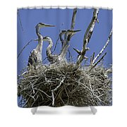 Blue Heron 36 Shower Curtain by Roger Snyder