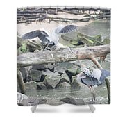 Blue Heron Fight Shower Curtain