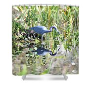 Blue Heron Fishing In A Pond In Bright Daylight Shower Curtain