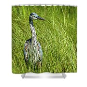 Blue Heron In A Marsh Shower Curtain