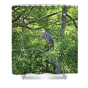 Blue Heron In Green Tree Shower Curtain