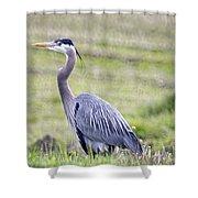 Blue Heron In Northern Wa  Shower Curtain