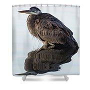 Blue Heron In Reflection, St. Marks Wildlife Refuge, Florida Shower Curtain