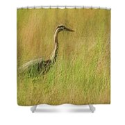 Blue Heron In The Grass. Shower Curtain