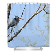 Blue Heron In Tree Shower Curtain