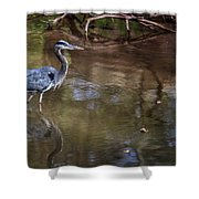 Blue Heron Stalking  Shower Curtain