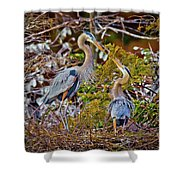 Blue Herons Shower Curtain
