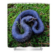 Blue Hognose Shower Curtain