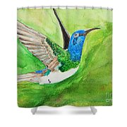 Blue Humming Bird Shower Curtain